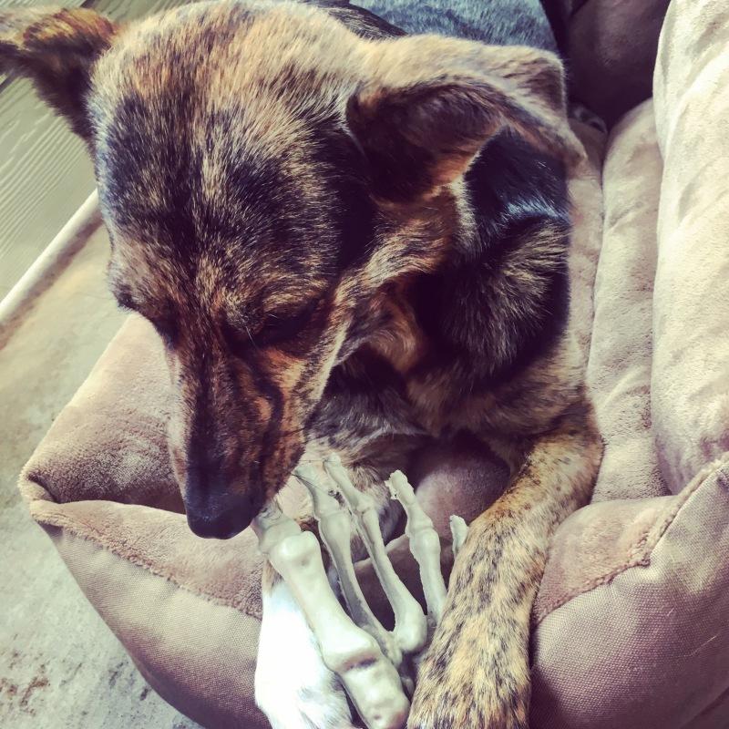 Bone Dog: BookRave